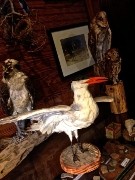 Some former island residents, preserved for viewing in the Hunting Lodge