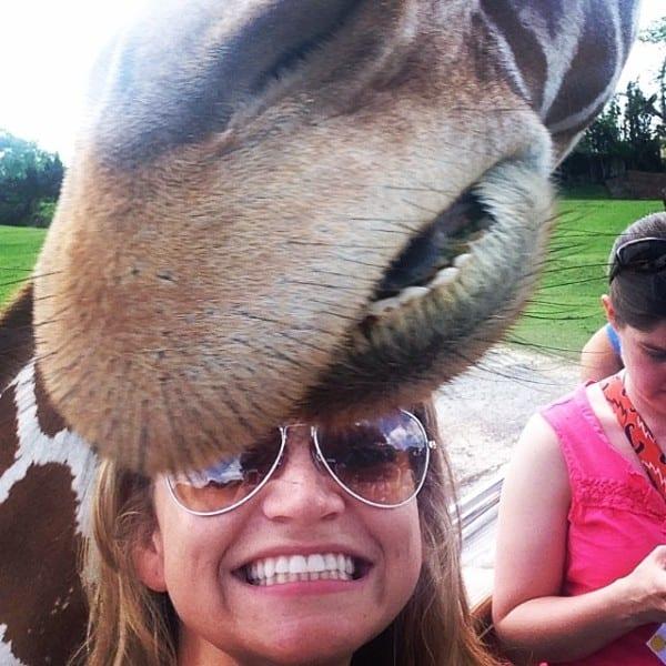 A giraffe selfie from yesterday's press visit to Busch Gardens Tampa