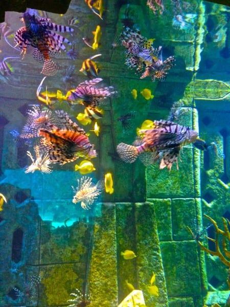 Art or aquarium? Hard to tell at Atlantis.