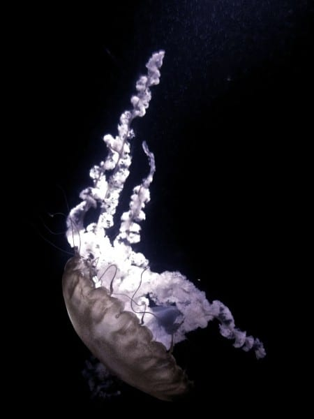 The jellyfish exhibit at The Dig is mesmerizing.