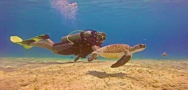Diving Bonaire - definitely, definitely a top dive destination