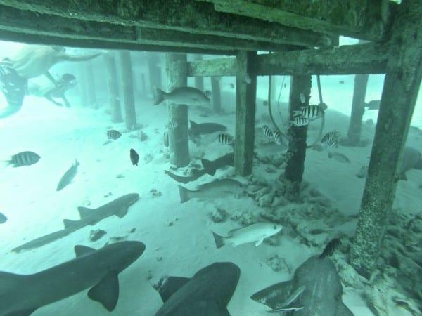 Compass Cay Exuma 4C's adventures