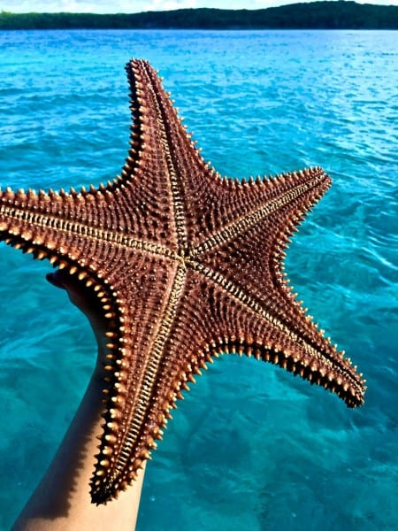 Exuma Adventures Starfish
