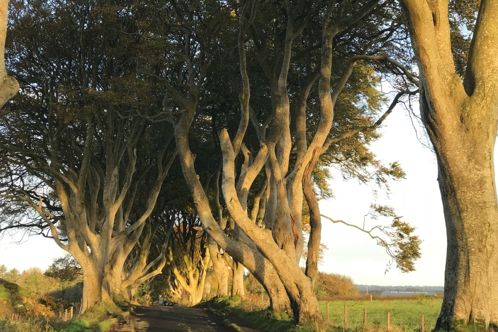 How to take Dark Hedges photos game of thrones locations