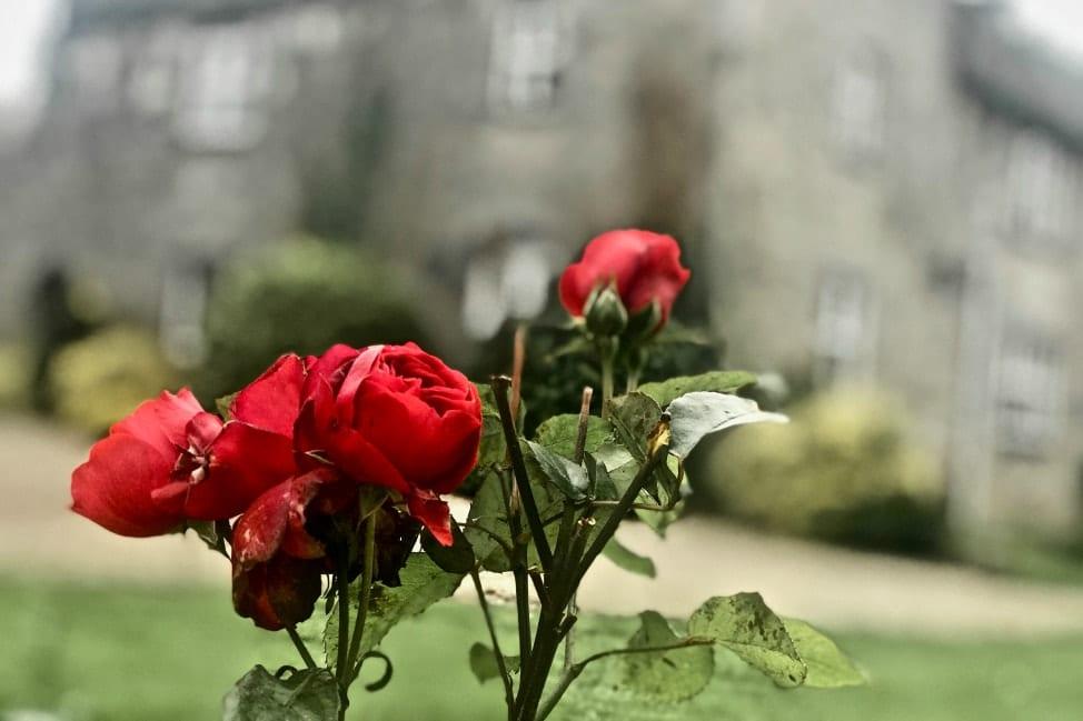 Fanningstown Castle - Adare Ireland - Angie Away