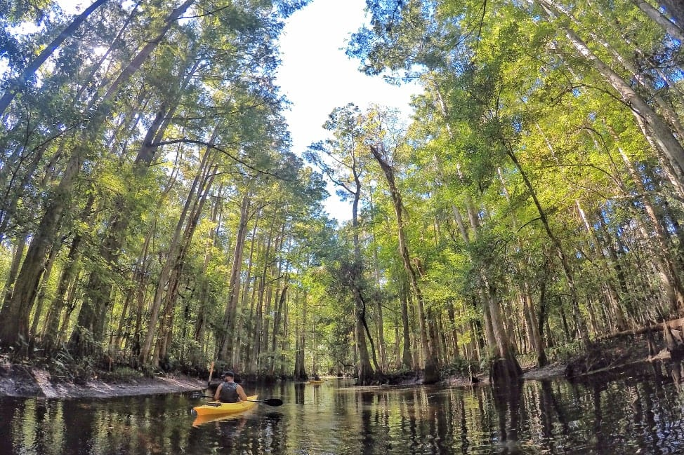 Kayaking Shingle Creek with the Paddle Center