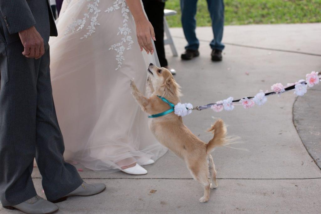 Pet friendly wedding venue in Orlando